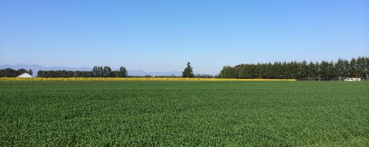 農地法関連許可